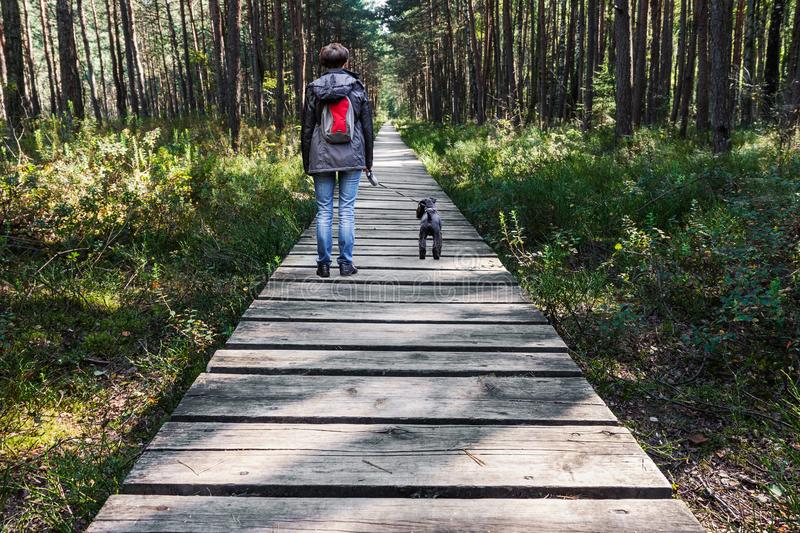 Woman walking dog on wooden pathway in the woods royalty free stock photography