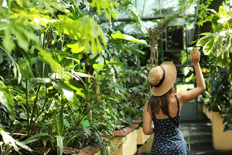 Woman walking among exotic plants stock photo