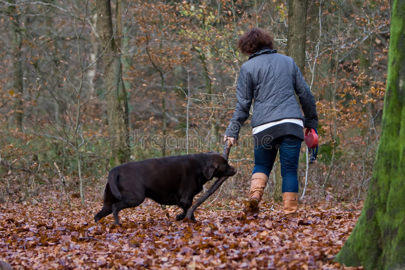 Woman walking in the forest. Woman is walking in the forest royalty free stock images