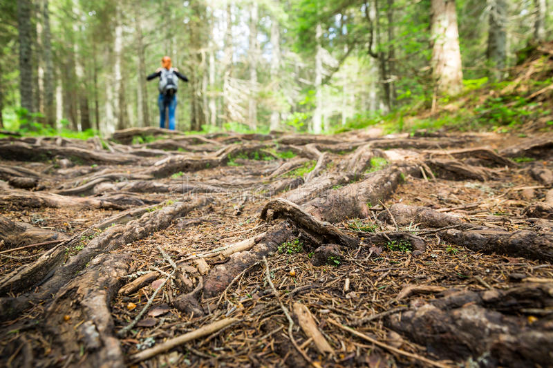 Woman is walking in the forest. Focus on roots royalty free stock photography