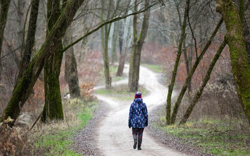 Woman walking in the forest. Rear view stock photography
