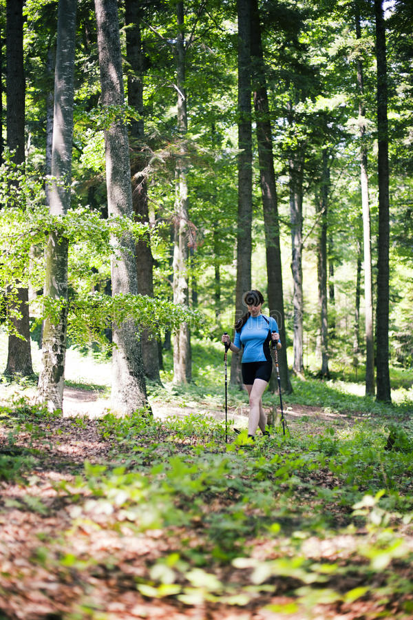 Woman walking in the forest. In a summer day stock image