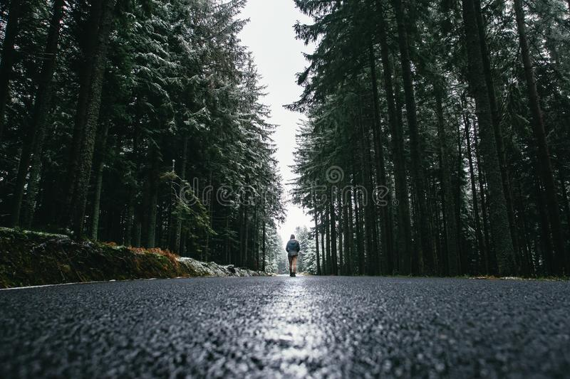 Woman is walking through forest in wintertime. Alone woman is going in cold day. royalty free stock photo