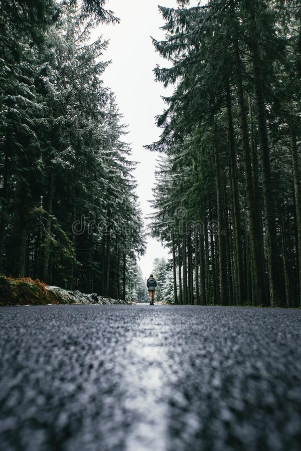 Woman is walking through forest in wintertime. Alone woman is going in cold day. Woman is walking through forest in wintertime. Alone woman is going in cold day stock image