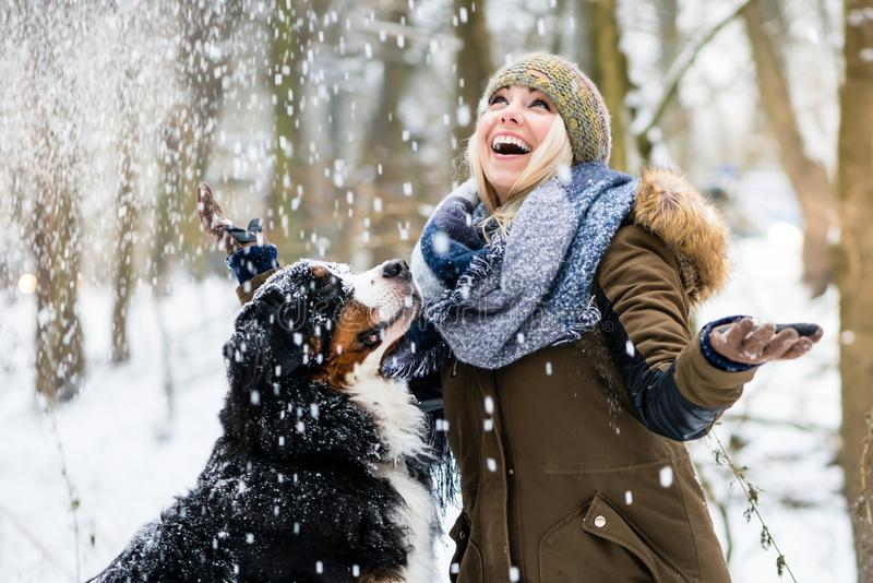 Woman walking her dog in the winter and both explore the snow to stock image