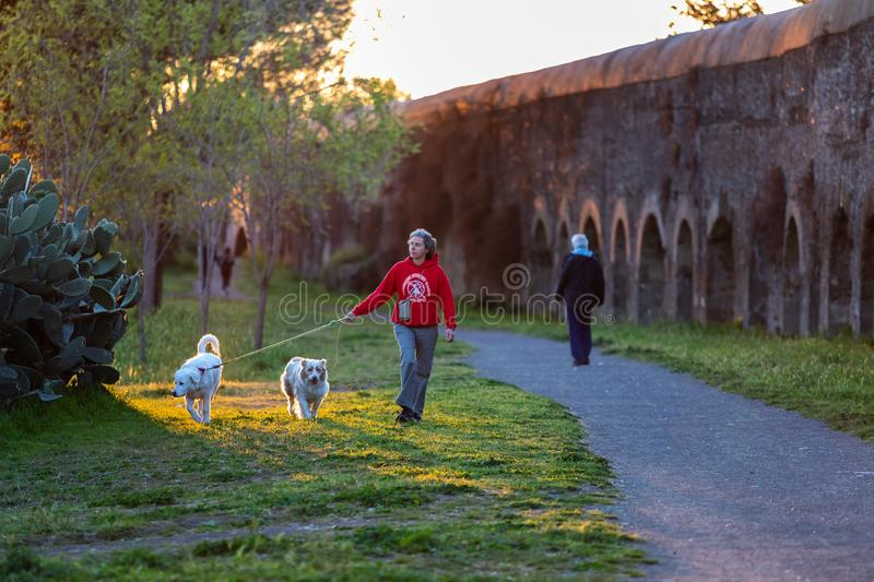 A woman walking her two dogs in the green of the public park royalty free stock image