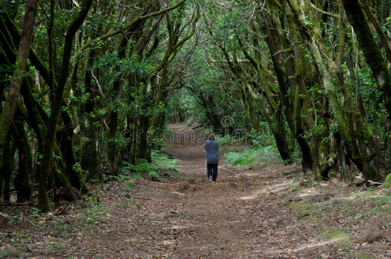 Woman walking through of a laurisilva forest. Garajonay National Park. La Gomera. Canary Islands. Spain royalty free stock photography