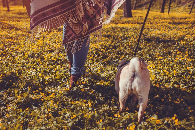 Woman walking pug dog in spring forest. Happy puppy running among yellow flowers in the morning. Dog enjoying nature royalty free stock photos