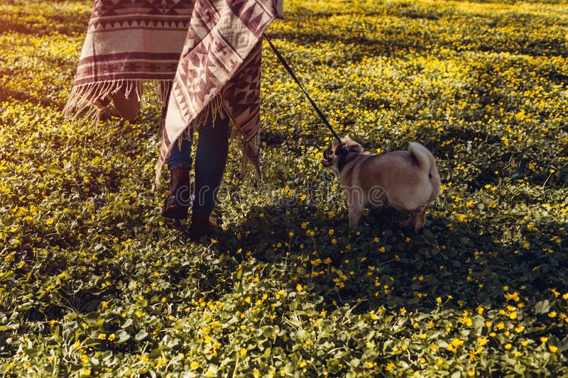 Woman walking pug dog in spring forest. Happy puppy running among yellow flowers in the morning. Dog enjoying nature royalty free stock image