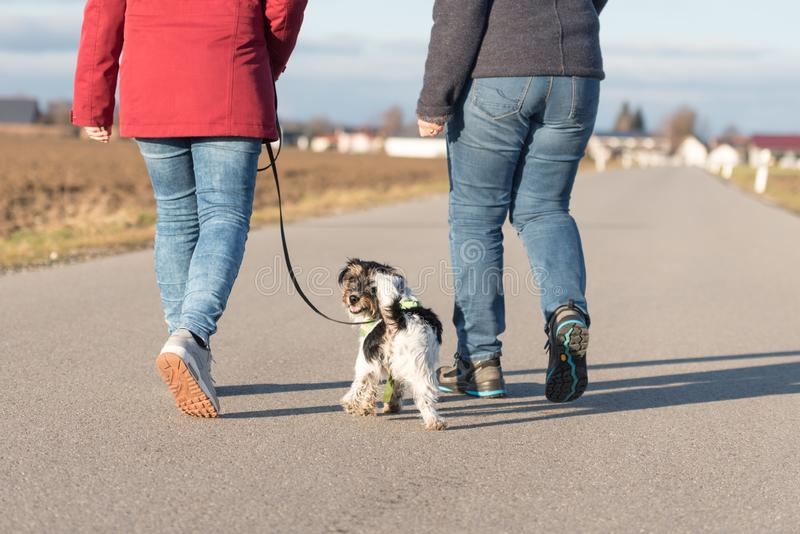 Woman is walking with a small obedient Jack Russell Terrier dog on a tar road. Dog is looking back. Woman is walking with a little obedient Jack Russell Terrier royalty free stock image