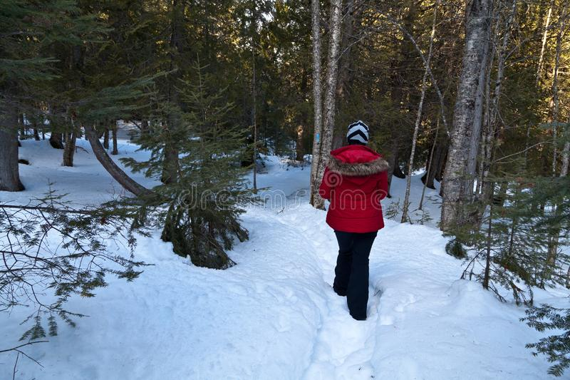 Woman walking on snow in the forest. Hiking in the snow covered snow is good for your body and soul. with proper gear its very peaceful and enjoyable experience stock images