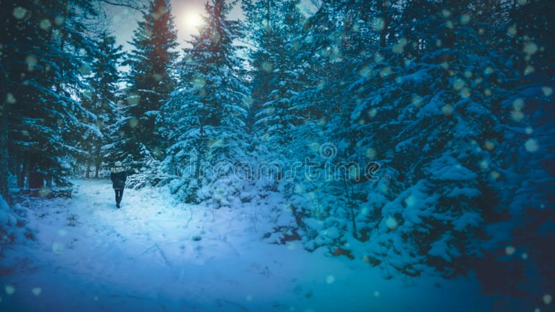 Woman walking in snowy blue forest. stock photo
