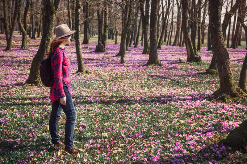 Woman walking spring forest and enjoy crocus flowers. Happy woman enjoying the nature in the spring forest and feeling free among meadow of beautiful crocus stock photography