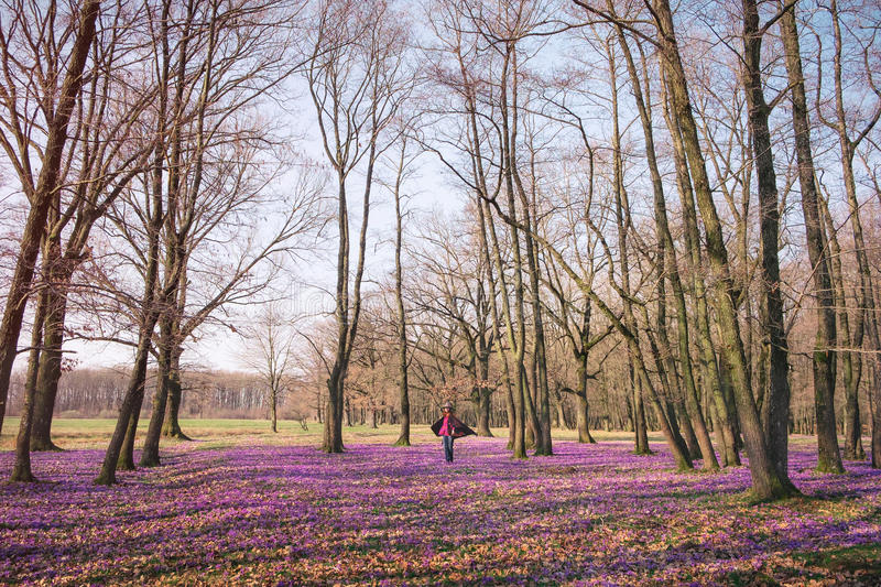 Woman walking spring forest and enjoy crocus flowers. Happy woman enjoying the nature in the spring forest and feeling free among meadow of beautiful crocus royalty free stock photos