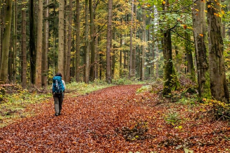 single trails calw)