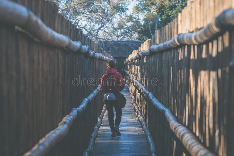 Woman walking in wooden narrow walkway. Protection for tourists in nature and wildlife reserve in South Africa. Concept of royalty free stock photo