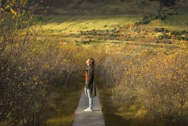 Woman walks along boardwalk/path traverses wetlands royalty free stock images