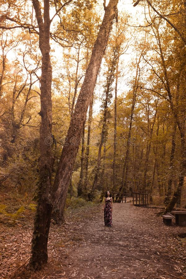 Woman walks through the woods in autumn. Woman walks through the forest in autumn while looking at nature stock images