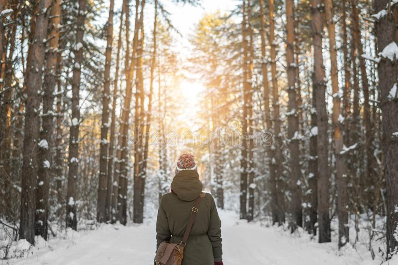 Woman walks a winter forest with the morning light streaming through the trees and illuminating the pine trees behind. royalty free stock photography
