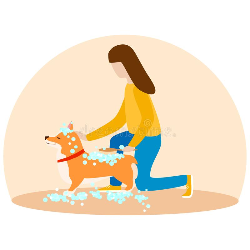 A woman washes her puppy Welsh Corgi. Dogs in soap foam. vector illustration