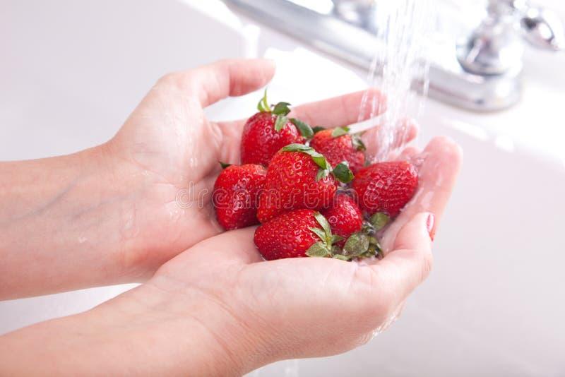Woman Washing Strawberries royalty free stock photo