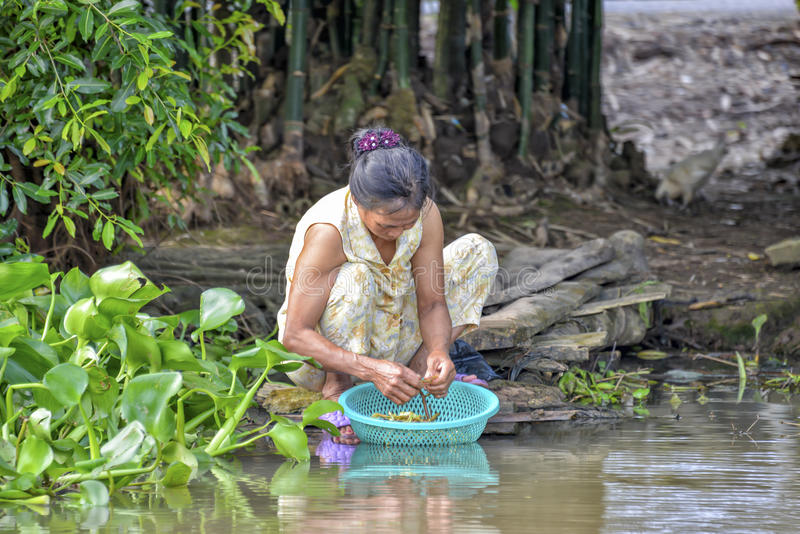 Woman washing vegetables in Mekong river stock photo