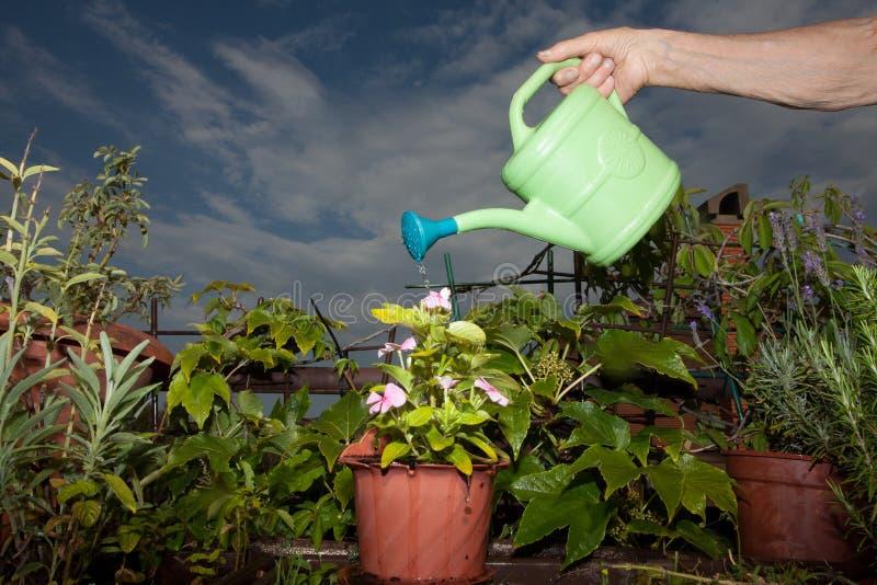 Woman watering flowers. Elderly woman watering flowers stock image