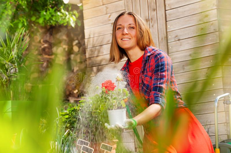 Woman watering garden flowers with hose sprinkler stock photos