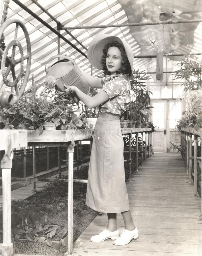 Woman watering plants in hothouse stock image