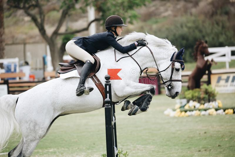 Woman Wearing Black Long-sleeved Blazer on White Horse royalty free stock photos