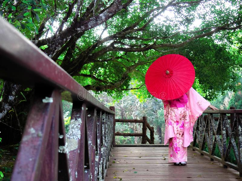 Woman is wearing Pink Japanese Traditional dress style Kimono. Girl is holding red umbrella. Lady is walking on the wooden bridge in the national park stock photography