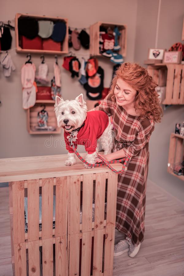 Woman wearing squared dress looking at her pet wearing red clothing stock photography