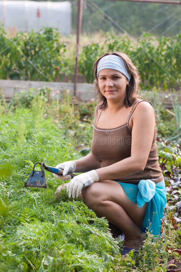 Woman weeding vegetable garden stock photos