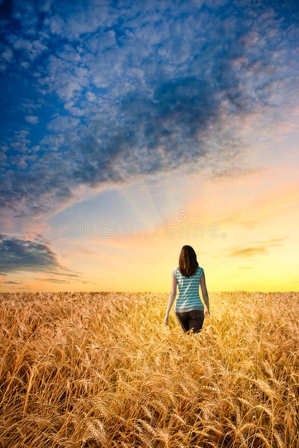Woman in wheat field stock photography