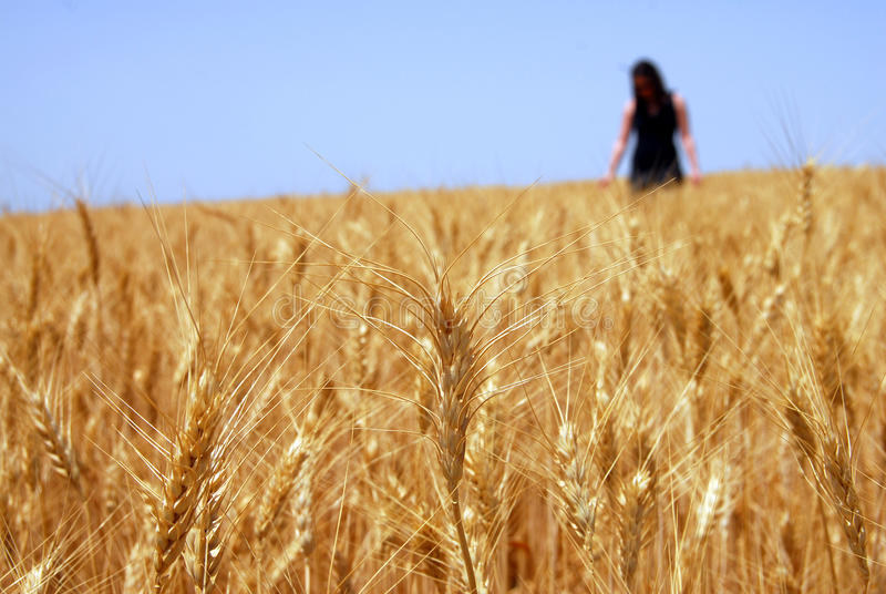 Download Woman in Wheat Field stock photo. Image of outdoors, farm - 24921490