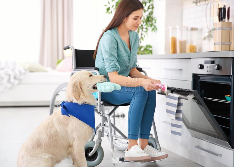Woman in wheelchair cooking with service dog royalty free stock photos