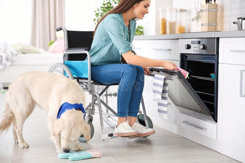 Woman in wheelchair cooking with service dog. By her side indoors stock image