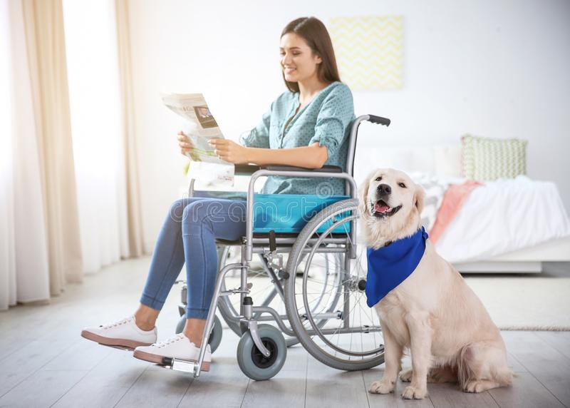 Woman in wheelchair reading newspaper with service dog stock images
