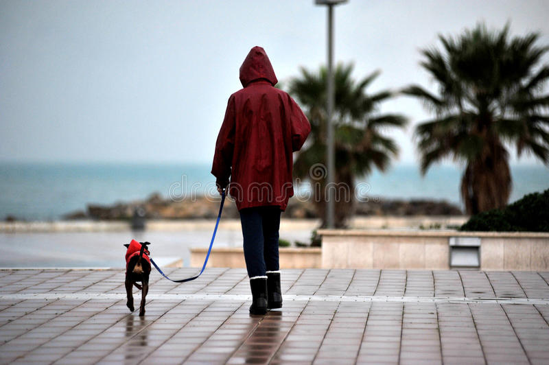 A woman whit dog stock images