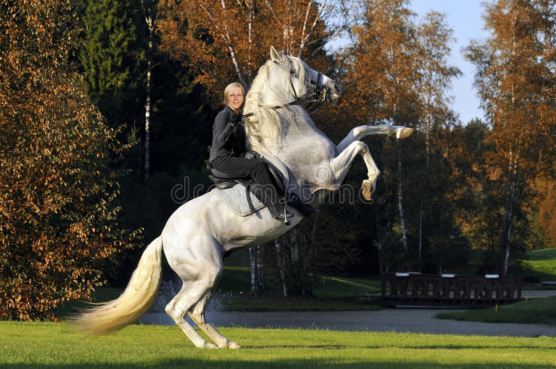 Woman on white horse in autumn royalty free stock photo