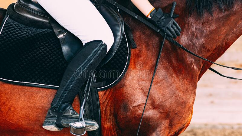 Woman in white riding pants and black riding boots sitting on a brown horse, black gloves on hands. Holding riding whip stock photos