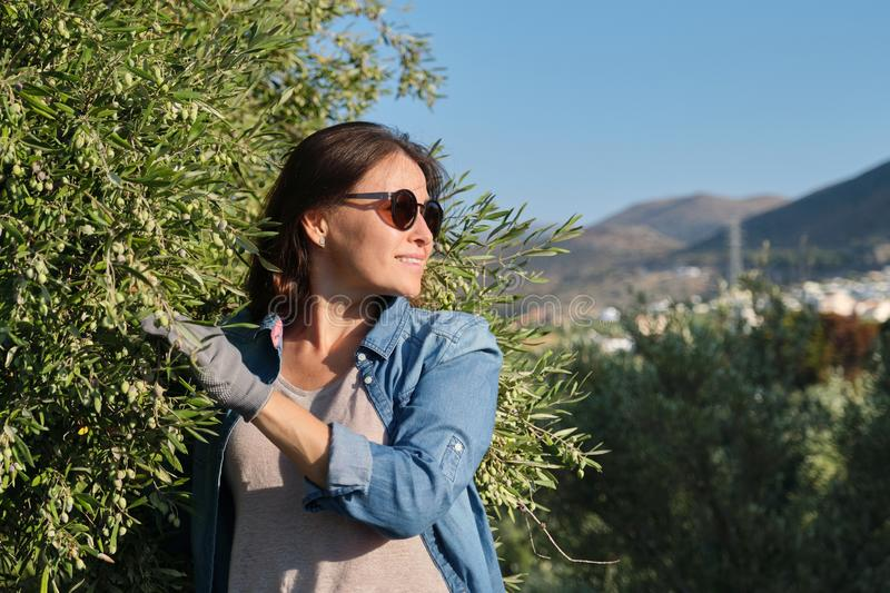 Woman worker of an olive farm, background olive garden in the mountains stock photo