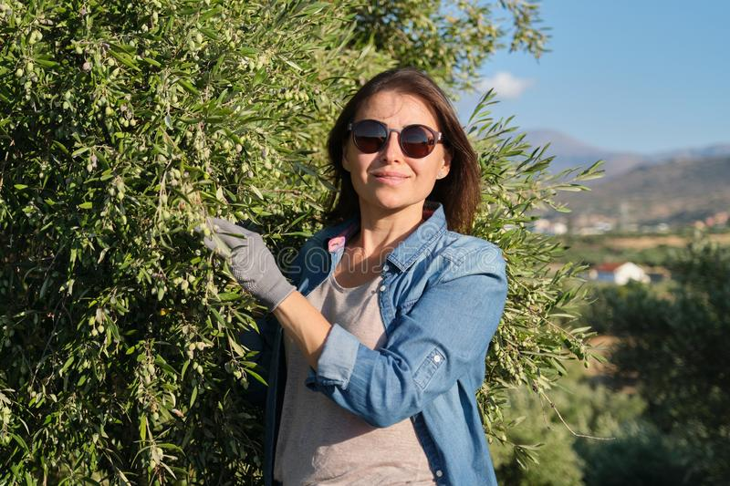 Woman worker of an olive farm, background olive garden in the mountains stock images