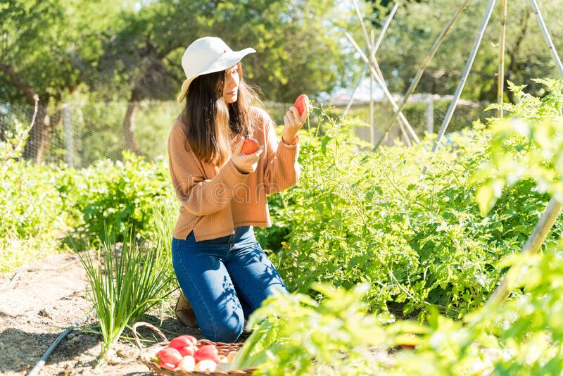 Woman Working In Farm On Sunny Day royalty free stock photos
