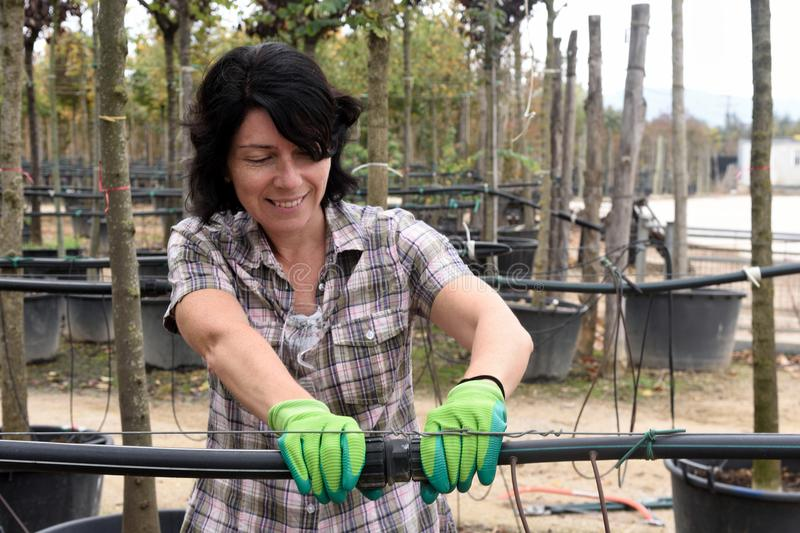 Woman working in the garden center stock image
