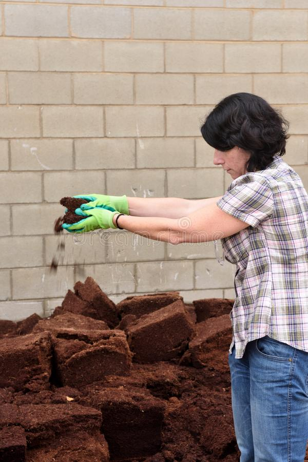 Woman working in the garden center, composting, royalty free stock image