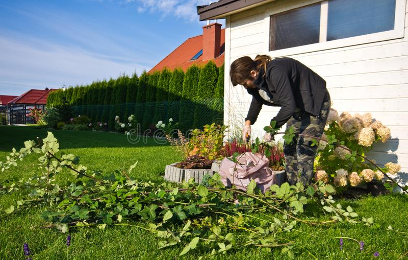 Woman working in a garden, cutting excess twigs of plants stock image