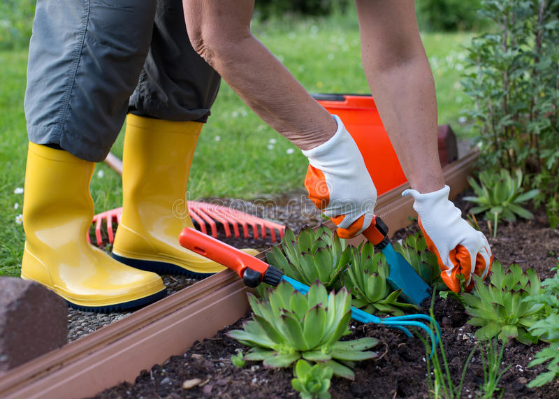 Woman working in garden with shovel and rake. Older woman working in garden. Close up of hands with gloves and wearing yellow gumboots. Planting with small stock photo