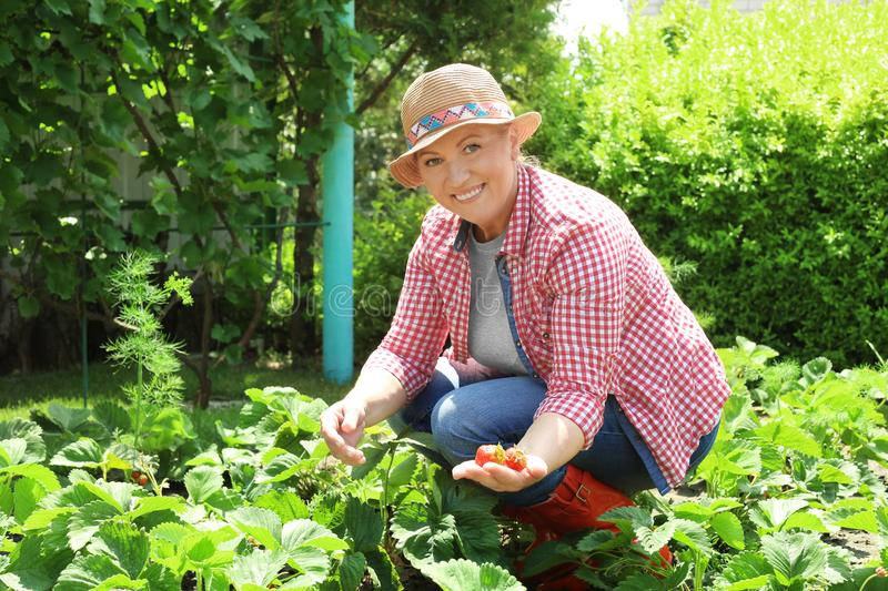 Woman working in garden royalty free stock images