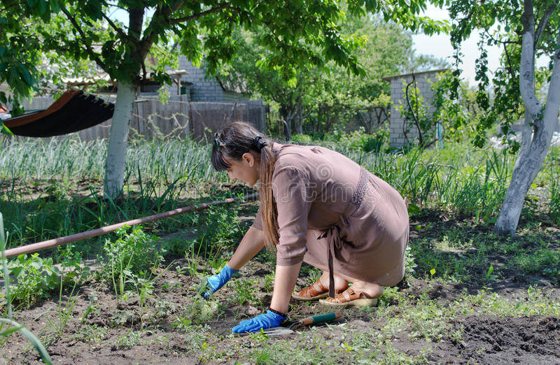 Woman working in the vegetable garden. Crouching down weeding between the rows of vegetables on a self-sufficient smallholding royalty free stock photography